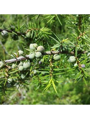 Genévrier Bio - Hydrolat de Juniperus communis 200 ml - Herbes et Traditions