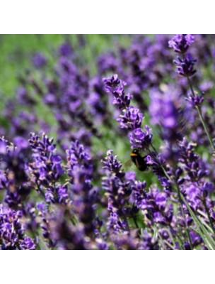 Lavande Fine Bio - Hydrolat de Lavandula Angustifolia 200 ml - Herbes et Traditions