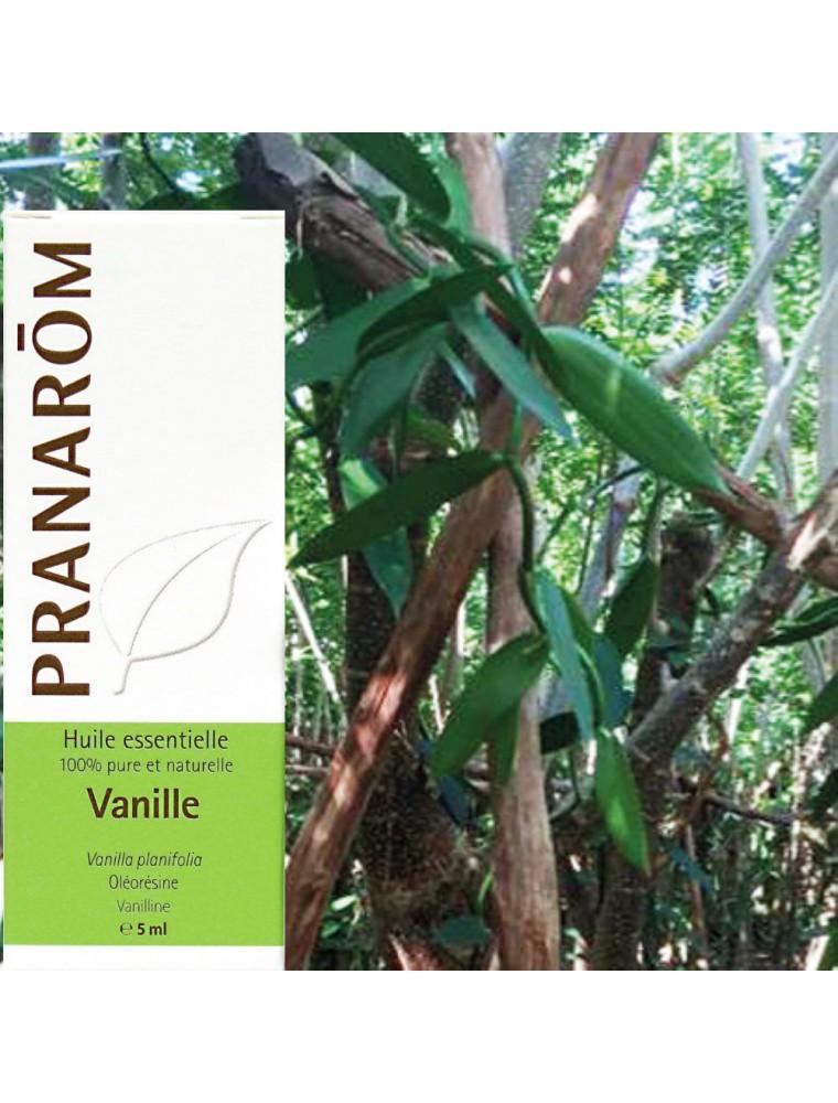 Vanille Bio - Vanilla planifolia 5 ml - Pranarôm