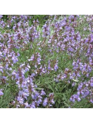https://www.louis-herboristerie.com/32642-home_default/sauge-sclaree-bio-hydrolat-de-salvia-sclarea-200-ml-herbes-et-traditions.jpg
