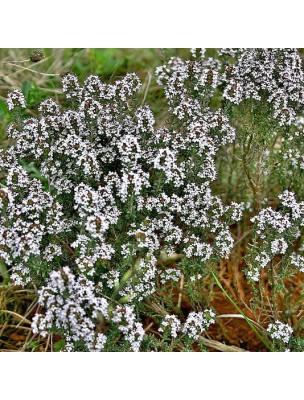https://www.louis-herboristerie.com/32652-home_default/thym-a-linalol-bio-hydrolat-de-thymus-vulgaris-200-ml-herbes-et-traditions.jpg