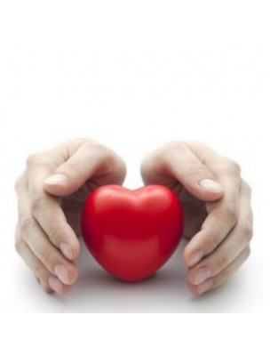 https://www.louis-herboristerie.com/34334-home_default/lilas-bourgeon-bio-cardio-vasculaire-50-ml-herbalgem.jpg
