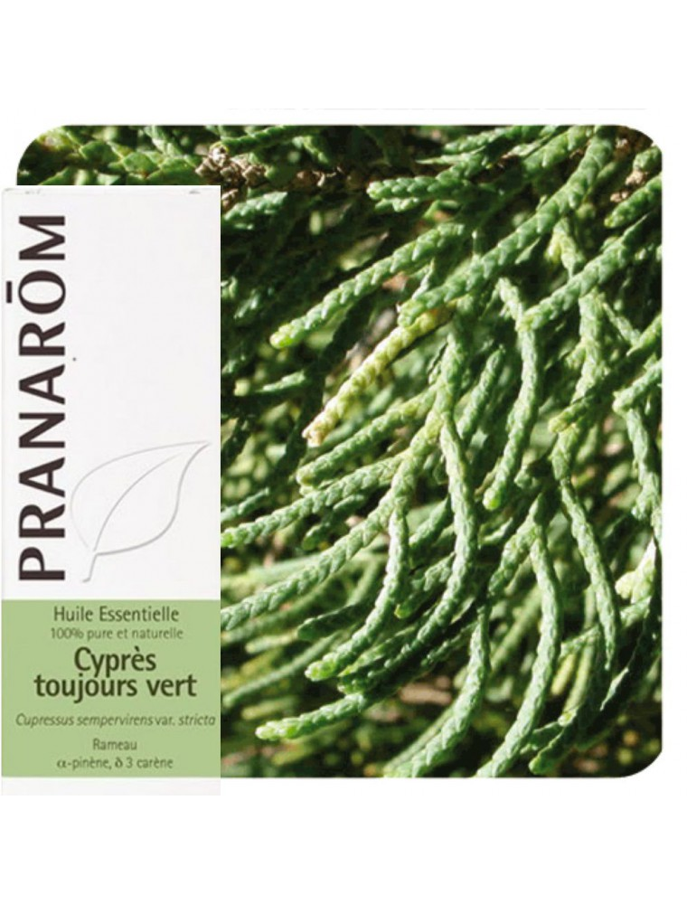 Cyprès de Provence (Cyprès toujours vert) - Huile essentielle de Cupressus sempervirens 10 ml - Pranarôm