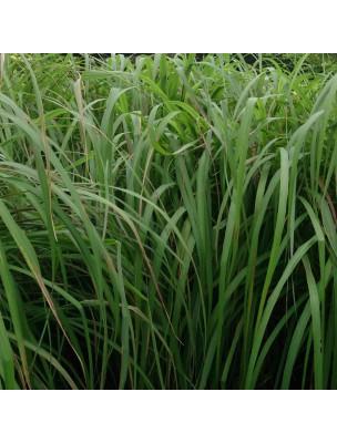Citronnelle de Java Bio - Huile essentielle de Cymbopogon winterianus 10 ml - Herbes et Traditions