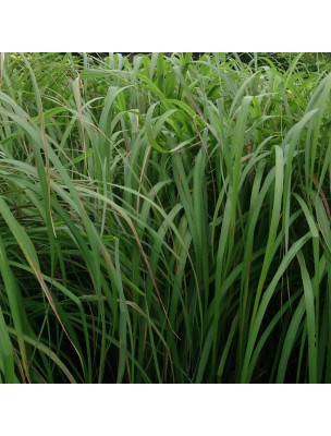 Lemongrass Bio - Perles d'huiles essentielles - Pranarôm