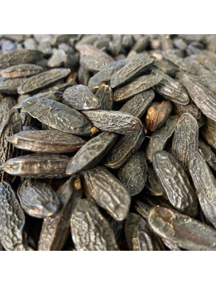 Fève de Tonka - Graines 50g - Tisane de Dipterix odorata