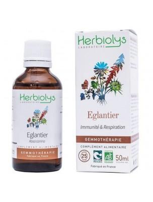 Eglantier Bio - Immunité & Respiration - Macérât de jeune pousse 50 ml - Herbiolys