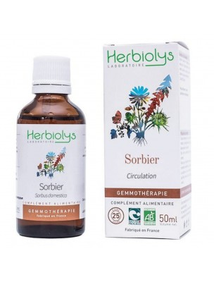 Sorbier domestique Macérât de bourgeon Bio - Circulation 50 ml - Herbiolys