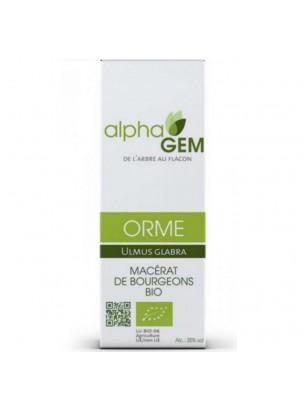 Orme Macérat de bourgeons Bio - Ulmus glabra 50 ml - Alphagem