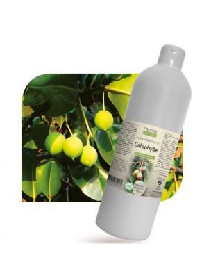 Calophylle Bio - Huile végétale de Calophyllum inophyllum 500 ml - Propos Nature