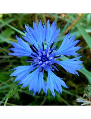 Bleuet Bio - Hydrolat (eau florale)  200 ml - Centifolia