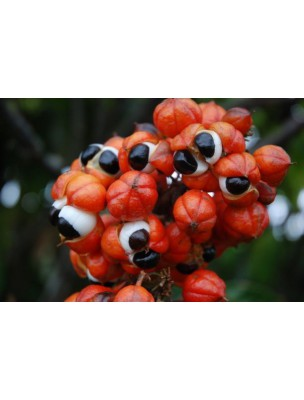 https://www.louis-herboristerie.com/4301-home_default/guarana-bio-tonus-et-vitalite-superfoods-100g-purasana.jpg