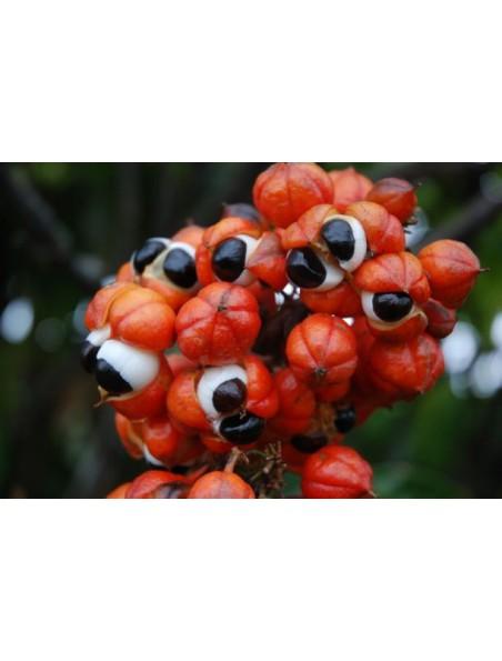 Guarana Bio - Tonus et Vitalité SuperFoods 100g - Purasana
