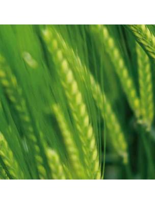 https://www.louis-herboristerie.com/43035-home_default/herbe-d-orge-bio-superaliment-200g-biosavor.jpg
