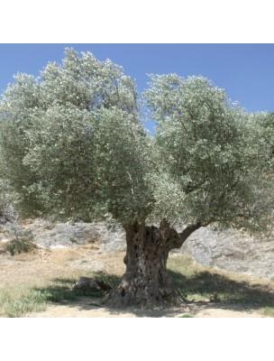 https://www.louis-herboristerie.com/44736-home_default/olive-bio-huile-vegetale-d-olea-europaea-500-ml-propos-nature.jpg
