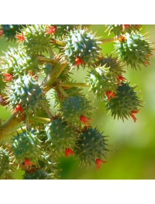 https://www.louis-herboristerie.com/47335-home_default/ricin-bio-huile-vegetale-de-ricinus-communis-50-ml-pranarom.jpg