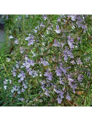 https://www.louis-herboristerie.com/47786-home_default/romarin-verbenone-bio-hydrolat-de-rosmarinus-officinalis-ct-verbenone-150-ml-pranarom.jpg