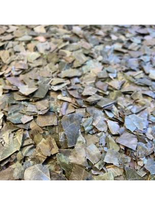 Combretum (Kinkeliba) - Feuille coupée 100g - Tisane de Combretum micranthum