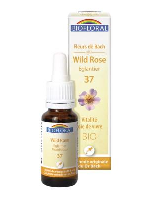 Wild Rose n°37 - Vitalité et Joie de Vivre Bio aux Fleurs de Bach 20 ml - Biofloral