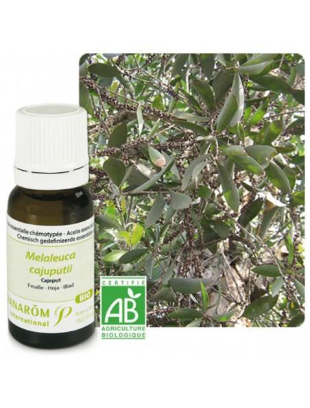 Huile essentielle Cajeput Bio – Melaleuca cajuputii 10 ml - Pranarôm