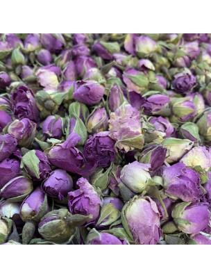 Rose de Damas Bio - Bouton Floral 50g - Tisane Rosa damascena Herrm