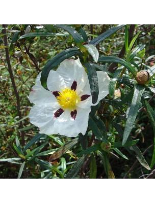 https://www.louis-herboristerie.com/51486-home_default/ciste-bio-hydrolat-de-cistus-ladanifer-200-ml-herbes-et-traditions.jpg