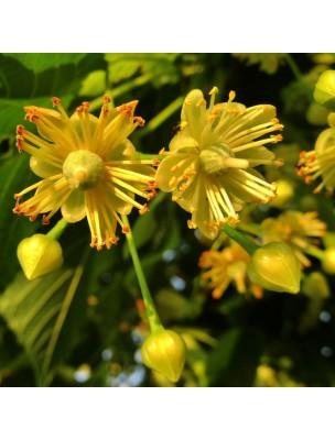 https://www.louis-herboristerie.com/51490-home_default/tilleul-bio-hydrolat-de-tilia-europaea-200-ml-herbes-et-traditions.jpg