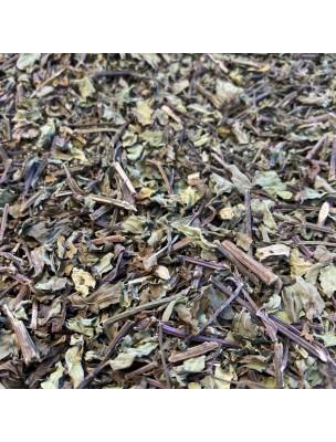 Image de Orthosiphon Bio - Feuilles 100 g - Tisane d'Orthosiphon aristatus (Blume) depuis ▷ Guarana Bio - Tonique et Minceur 120 gélules -