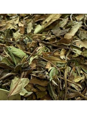 Image de Paï Mu Tan Bio - Thé Blanc Nature de Chine 20g depuis Thés blancs de la marque Louis Herboristerie