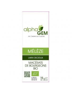 Mélèze Macérat de bourgeons Bio - Larix decidua 15 ml - Alphagem