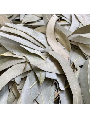 Eucalyptus Bio - Feuilles entières 100g - Tisane Eucalyptus globulus