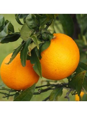 https://www.louis-herboristerie.com/57439-home_default/oranger-doux-petale-100g-tisane-de-citrus-sinensis.jpg