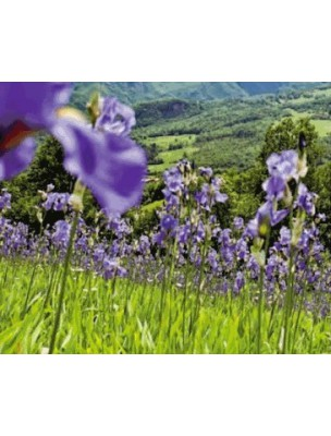 Crème de Nuit hydratante (Iris) - Nourrit la peau 30ml Weleda®