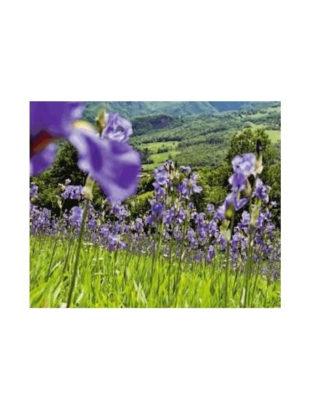 Fluide hydratant à l'Iris - Peaux normales à mixtes 30 ml - Weleda