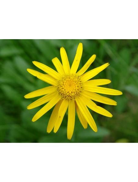 Arnica Bio - Fleurs 50g - Tisane de Arnica montana L.