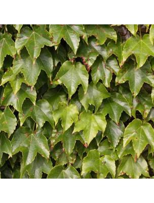 https://www.louis-herboristerie.com/6311-home_default/vigne-vierge-bourgeon-bio-articulations-et-tendons-15-ml-herbalgem.jpg