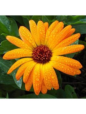 https://www.louis-herboristerie.com/6419-home_default/savon-vegetal-au-calendula-nettoie-en-douceur-les-peaux-sensibles-100-g-weleda.jpg
