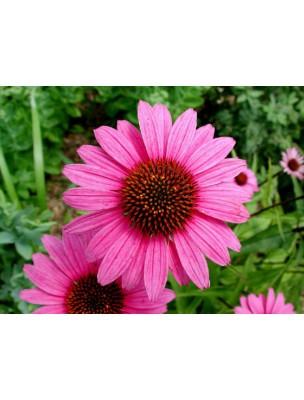 https://www.louis-herboristerie.com/6713-home_default/echinaceae-bio-glules-purasana.jpg