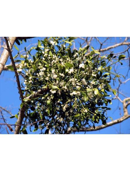 Gui bourgeon Bio - Circulation 50 ml - Herbalgem