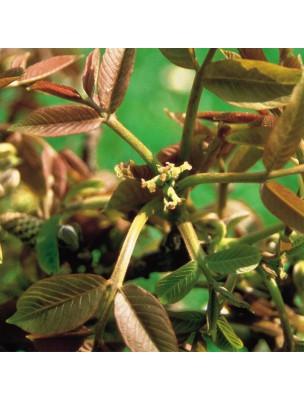 https://www.louis-herboristerie.com/7145-home_default/walnut-noyer-20-ml-n33-fleurs-de-bach-original.jpg