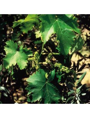 https://www.louis-herboristerie.com/7147-home_default/vine-vigne-20-ml-n32-fleurs-de-bach-original.jpg