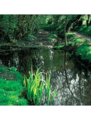 https://www.louis-herboristerie.com/7160-home_default/rock-water-eau-de-roche-20-ml-n-27-fleurs-de-bach-original.jpg