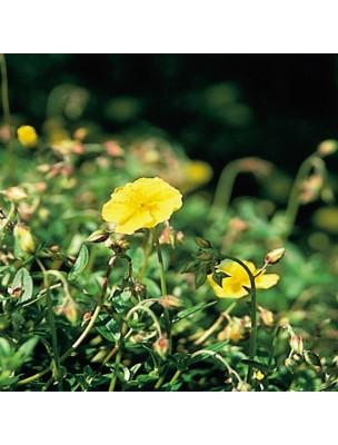 https://www.louis-herboristerie.com/7162-home_default/rock-rose-helianthme-20-ml-n26-fleurs-de-bach-original.jpg