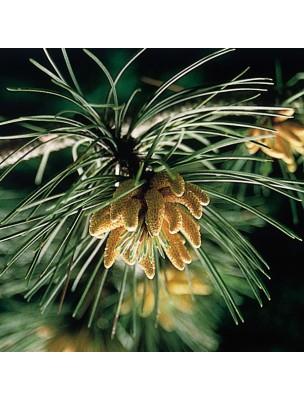 https://www.louis-herboristerie.com/7190-home_default/pine-pine-20-ml-n-24-fleurs-de-bach-original.jpg