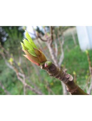 https://www.louis-herboristerie.com/7197-home_default/noctigem-gc11-bio-sommeil-50-ml-herbalgem.jpg