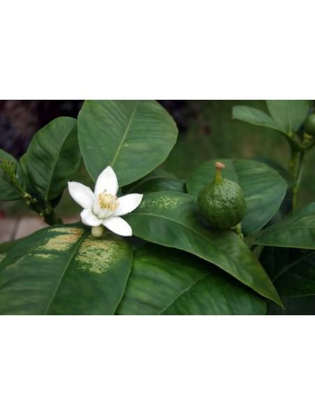 Sencha Exotique - Thé vert et blanc, bergamote et fruits de la passion 100g - L'Autre thé