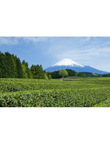 Théière Fuji noire avec son filtre et ses 2 bols