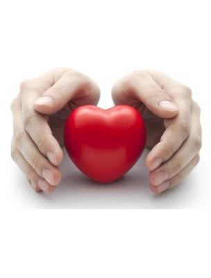 https://www.louis-herboristerie.com/7486-home_default/cholestegem-gc06-bio-cholesterol-15-ml-herbalgem.jpg