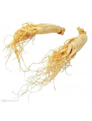 https://www.louis-herboristerie.com/7507-home_default/ginseng-bio-tonique-et-fortifiant-80-gelules-purasana.jpg