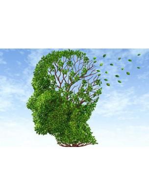 https://www.louis-herboristerie.com/7528-home_default/memogem-gc10-bio-memoire-et-concentration-50-ml-herbalgem.jpg